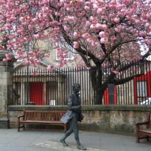 Fergusson blossom 3
