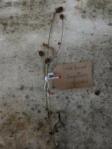 Canongate Dunbar's Close 180820 Great Burnet